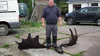 """I resti di un alce estinto, vecchi oltre 10.000 anni, """"pescati"""" in Irlanda"""