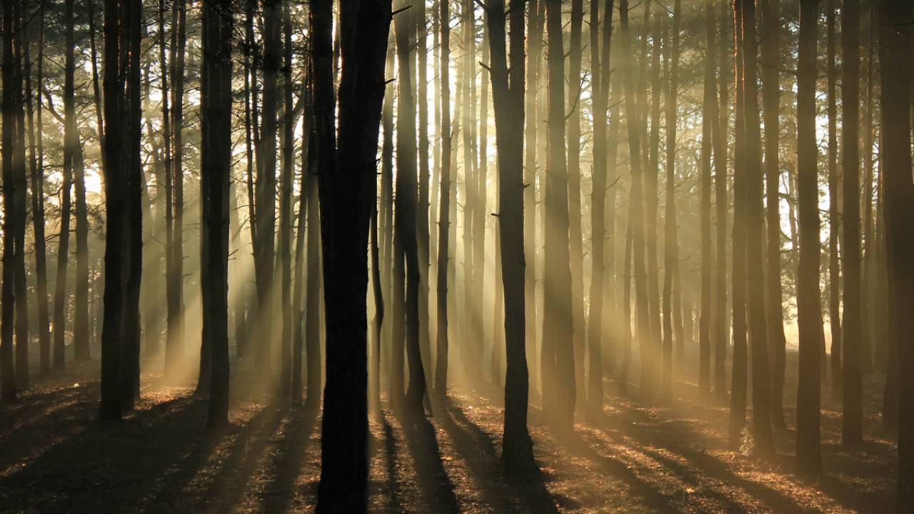 """Forest """"bathing"""" to clean the mind"""