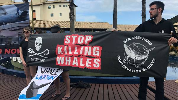 Baleines : la chasse continue