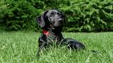 پیدا شدن یک سگ محکومی را از ۵۰ سال زندان نجات داد