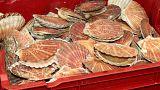 Deniz tarağı