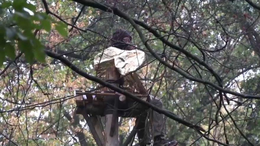 شاهد أنصار البيئة يعيشون على قمم الأشجار منعا من قطعها في ألمانيا