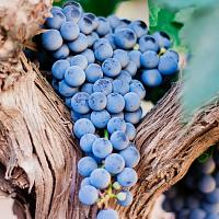 On the trail of Moldovan wine