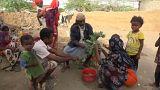 Yemenliler yaprak yiyerek ayakta kalmaya çalışıyor