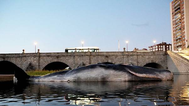 Life-size art installation of sperm whale spotted in Madrid's riverbank