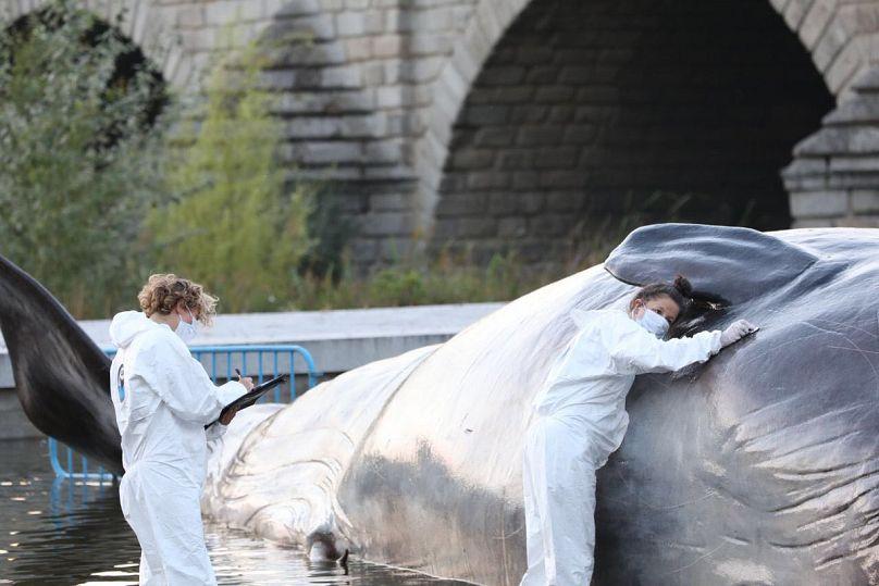 ¡Aparece una ballena en el rio Manzanares de Madrid!