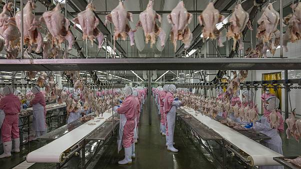 Jiangsu, China, June 16, 2016. Chicken processing plant. © George Steinmetz