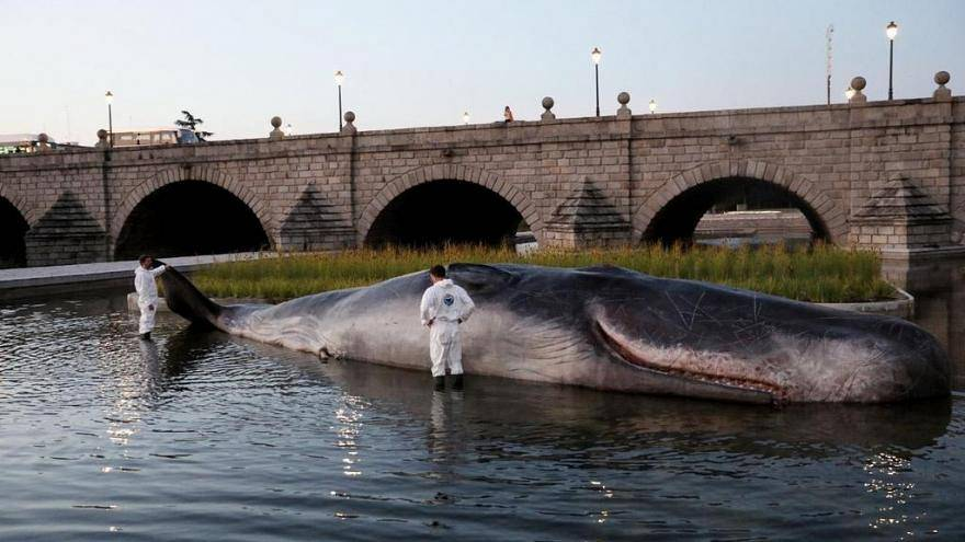 Cosa ci fa un capodoglio arenato sul fiume Manzanares a Madrid?