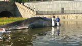 Une baleine plus vraie que nature à Madrid