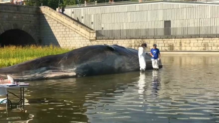 Uma baleia na cidade de Madrid