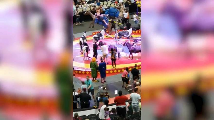 Watch: Seven injured as camel runs amok at Pittsburgh circus