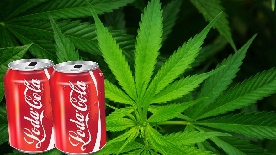 کوکاکولا: تولید نوشیدنی کانابیس را بررسی میکنیم