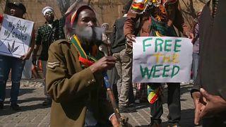 شاهد : احتفالات بتشريع استخدام الماريجوانا في جنوب أفريقيا