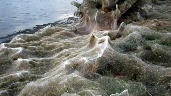 In pictures: Eerie spiderweb covers entire shoreline in Greece