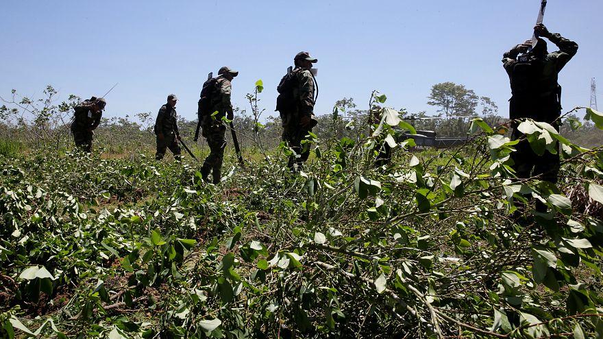 La Colombie toujours premier producteur de cocaïne dans le monde