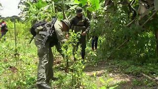 Aumento recorde da produção de coca na Colômbia