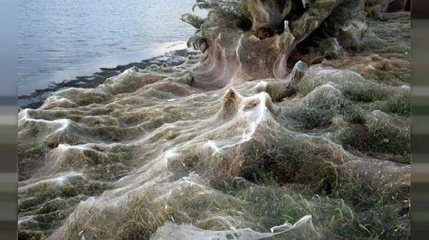 300-Meter-Spinnweben verhüllen Küste in Griechenland - Fotos