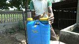 Indien: Tödliche Pestizide bedrohen Baumwollbauern