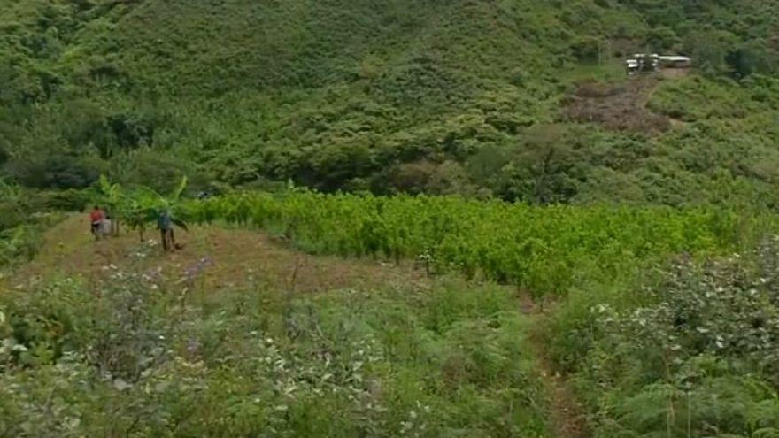 زراعة الكوكايين الكولومبية تحقق رقماً قياسياً بقيمة 2.7 مليار دولار