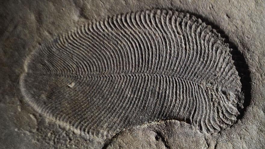 علماء يتعرفون على أقدم حيوانات الأرض على الإطلاق