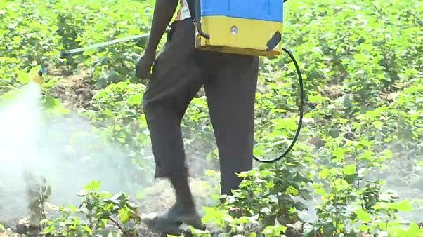 """India: il pesticida """"mortale"""""""