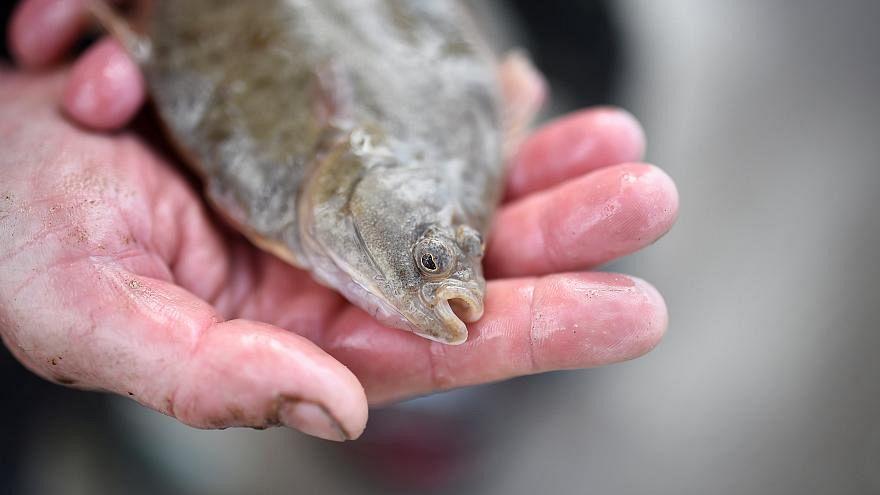 Fisch-Esser aufgepasst! EU-Bericht warnt vor Quecksilber-Gefahr