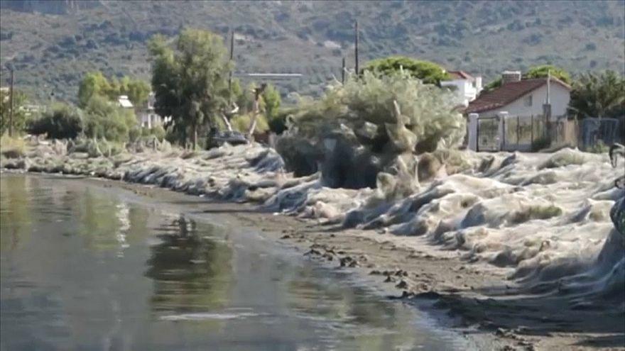 شاهد : شباك العناكب يغطي الأشجار والقوارب في بلدة يونانية