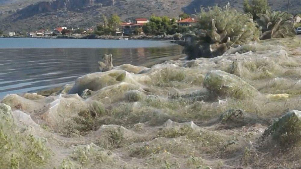 Город в Греции окутала паутина