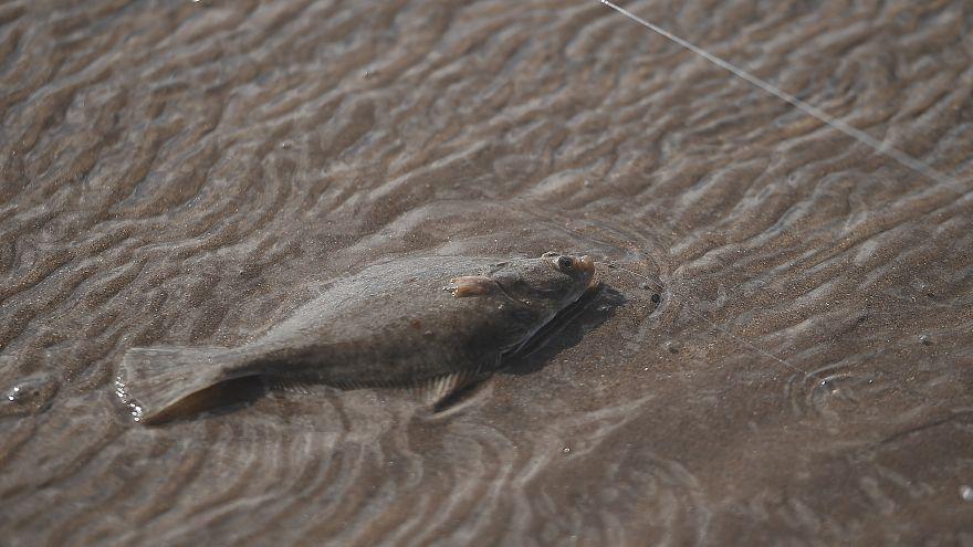 علماء يطالبون الاتحاد الأوروبي بوضع حد للصيد الجائر بالمتوسط