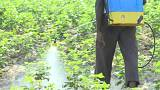 Inde : alerte aux pesticides mortels
