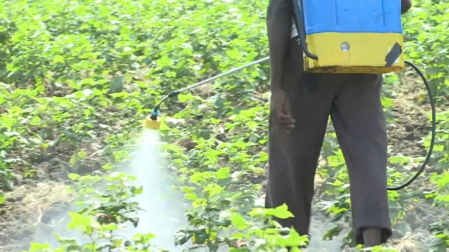 Inde : alerte aux pesticides mortels