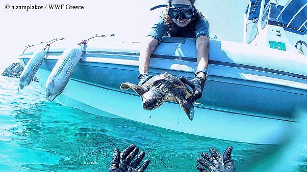 Διάσωση θαλάσσιας χελώνας στη Σύρο
