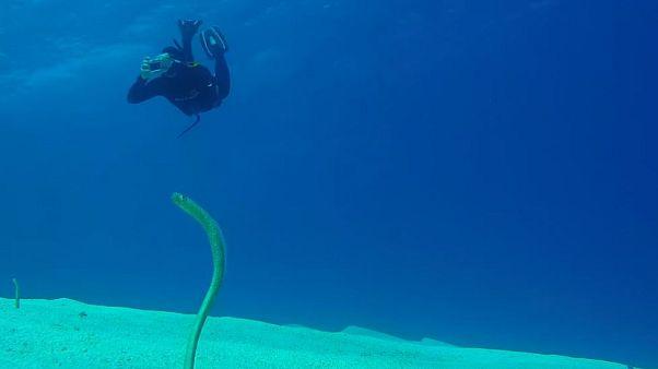 شاهد: كائنات بحرية متمايلة في قيعان البحر الأحمر
