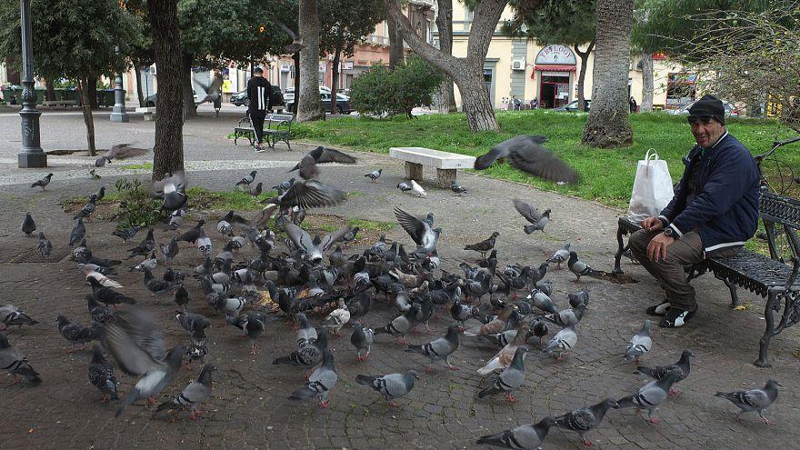 Tayland'da güvercinlere yem verenlere hapis cezası geliyor