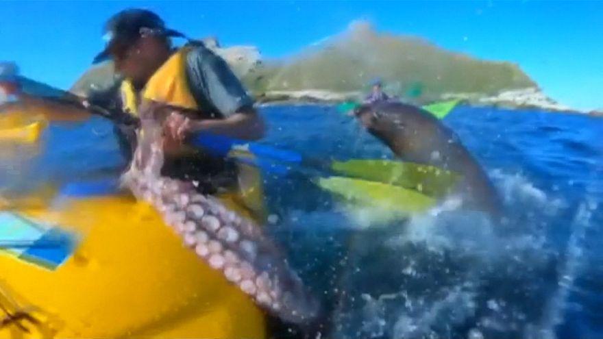 Le kayakiste, l'otarie et le poulpe