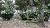 Σπασμένα κλαδιά δέντρων στο Πάρκο του Μπαρουτάδικου στο Αιγάλεω