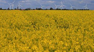 Megújuló energiaforrásból nyeri az EU az áramának a 30 százalékát