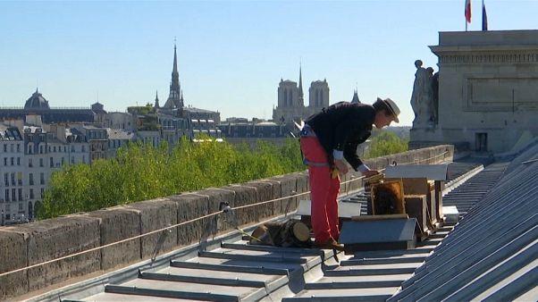 Des butineuses sur les toits de Paris