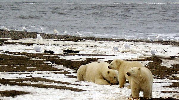 Arctic heatwave could result in summer-like warmth for Alaska