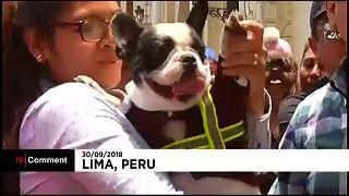 Decenas de feligreses acuden a bendecir a sus mascotas en Perú