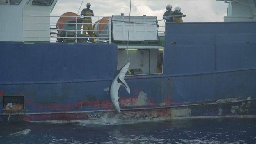 Schlag gegen Haifischer