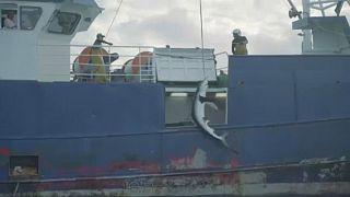 Lebuktak az illegális cápahalászok