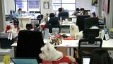 Kifejezetten hasznos lehet a kutya az irodában