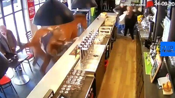 [vidéo] Un cheval de l'hippodrome de Chantilly s'entraîne dans un bar