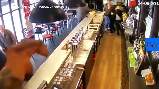 Chantilly: Was macht das Pferd in der Bar?