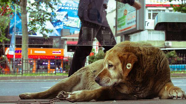 استانبول، شهر مهربان با حیوانات خیابانی