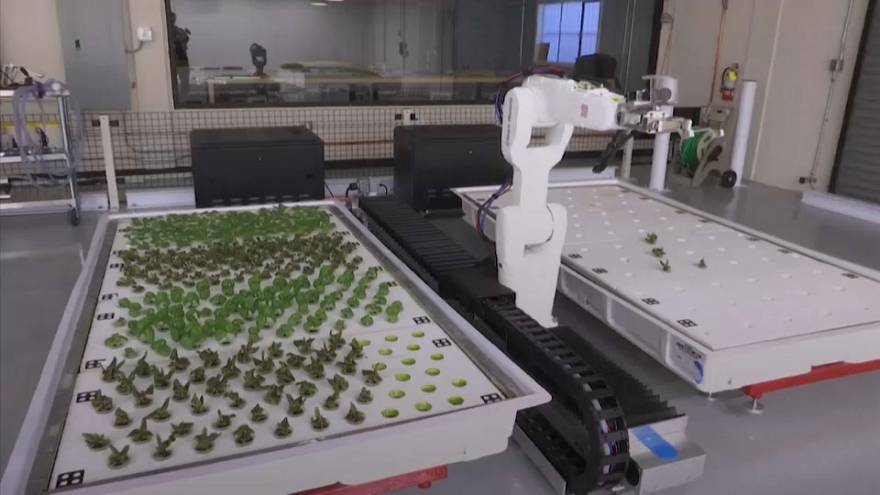 Robot-farmed veggies ready for consumption