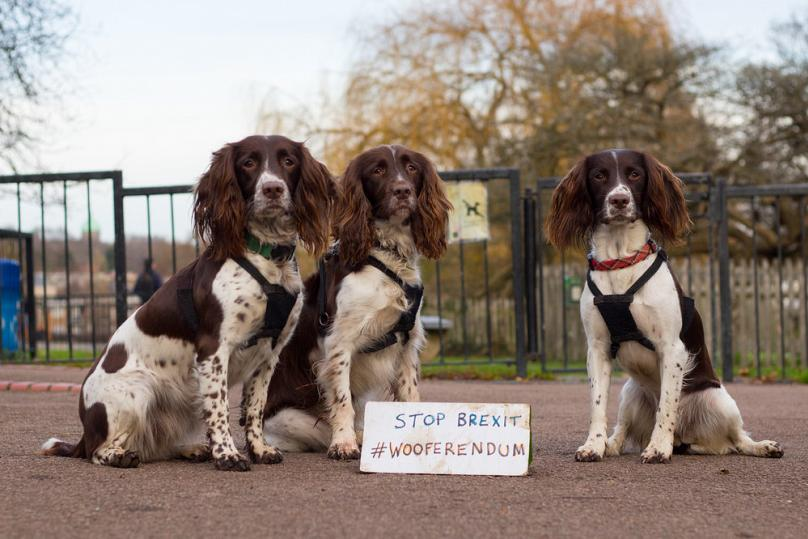 Courtesy of Wooferendum.org