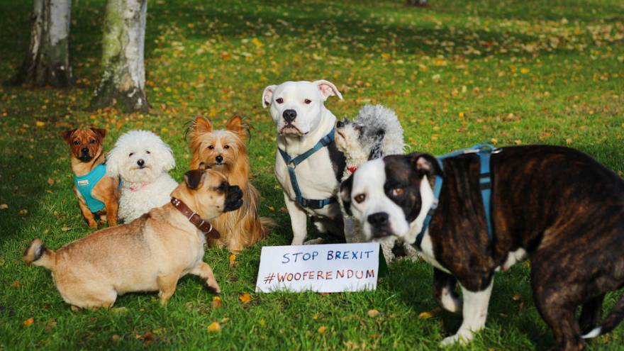 British dogs are making their barks heard this Sunday