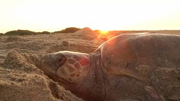 Soldaten bewachen Schildkröten